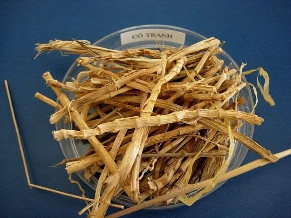 Rễ cỏ tranh | công dụng rễ cây cỏ tranh | địa chỉ bán rễ cỏ tranh